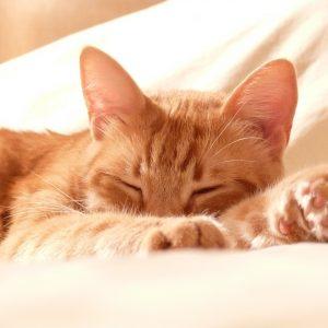 Calm Kitty Reiki