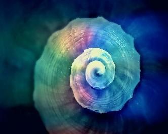 Blue Sea Shell Attunement